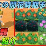 【あつ森攻略】低木の全種類と色、開花時期まとめてみた【あつまれ どうぶつの森】