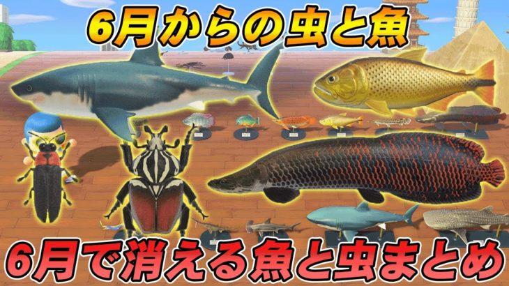 【あつ森攻略】模型で見る北半球の6月から捕れる虫と魚、捕れなくなる虫と魚まとめ【あつまれ どうぶつの森】