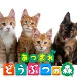 【あつ森生放送アーカイブ】ネコを求めていたら運命の動物に出会った新住民勧誘旅行まつり【あつまれ どうぶつの森】