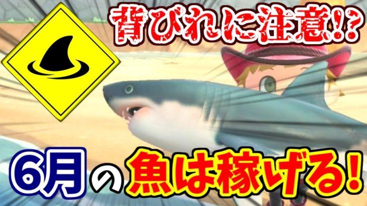 【#あつ森】6月のお金稼ぎはサメが熱い!金策になる魚釣りの解説【あつまれどうぶつの森】