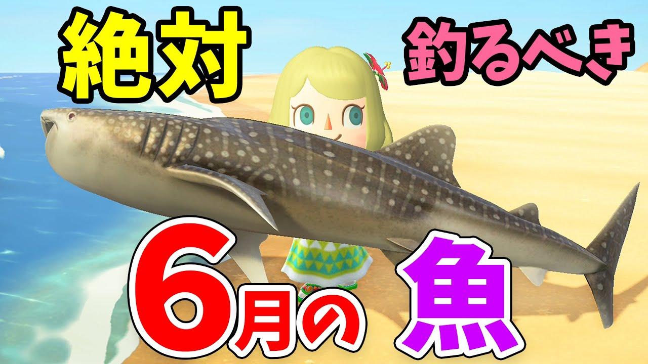 あつ 森 魚 六 月