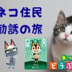 【あつ森生放送】ネコ祭りじゃぁ【あつまれ どうぶつの森】