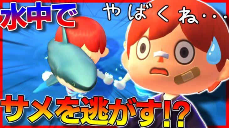 【あつ森】海の中でサメを逃がしてみた結果wwwww【あつまれどうぶつの森】