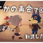 【あつ森】過去作で一番好きだった子との突然の再会!?さあどうする…【あつまれどうぶつの森/Animal Crossing】【実況/くるみ/しゃちく/しゃちくるみ/シュガートース島/びすけっ島】