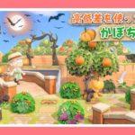 【あつ森実況】洋風なかぼちゃ畑を作る♪【島クリ】【レイアウト】【あつまれどうぶつの森】【女性実況者】【TAMAchan】
