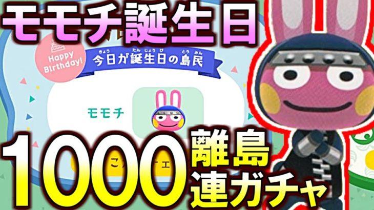 (あつ森)モモチ誕生日記念!累計1000枚のモモチ離島ガチャやるぞ!(あつまれどうぶつの森)