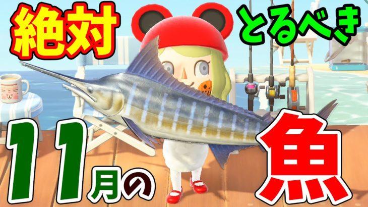 【あつ森】11月の魚を全て紹介!レアな魚の値段や釣り方をコンプしながら徹底解説!マグロやゴールデントラウトなど崖の上の魚の模型をGETしよう【あつまれどうぶつの森 11月の魚コンプリート】