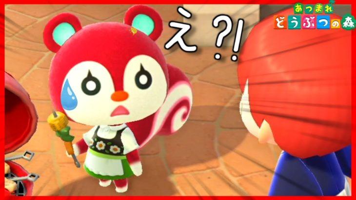 【あつ森】グミちゃんを救いたい!!!!【あつまれどうぶつの森】