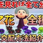【あつ森】青バラだけじゃない!レア花6種の交配方法をまとめて紹介!!【あつまれ どうぶつの森】【ぽんすけ】