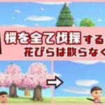 【あつ森】小ネタ検証!桜の木を全て伐採すると花びらは散らなくなるのか?【あつまれ どうぶつの森】〈レウン GAME TV〉